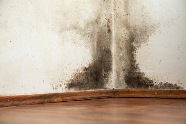 5 Cara Alami Mencegah Ruangan Menjadi Lembab dan Dingin